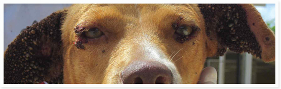 hond-met-teken